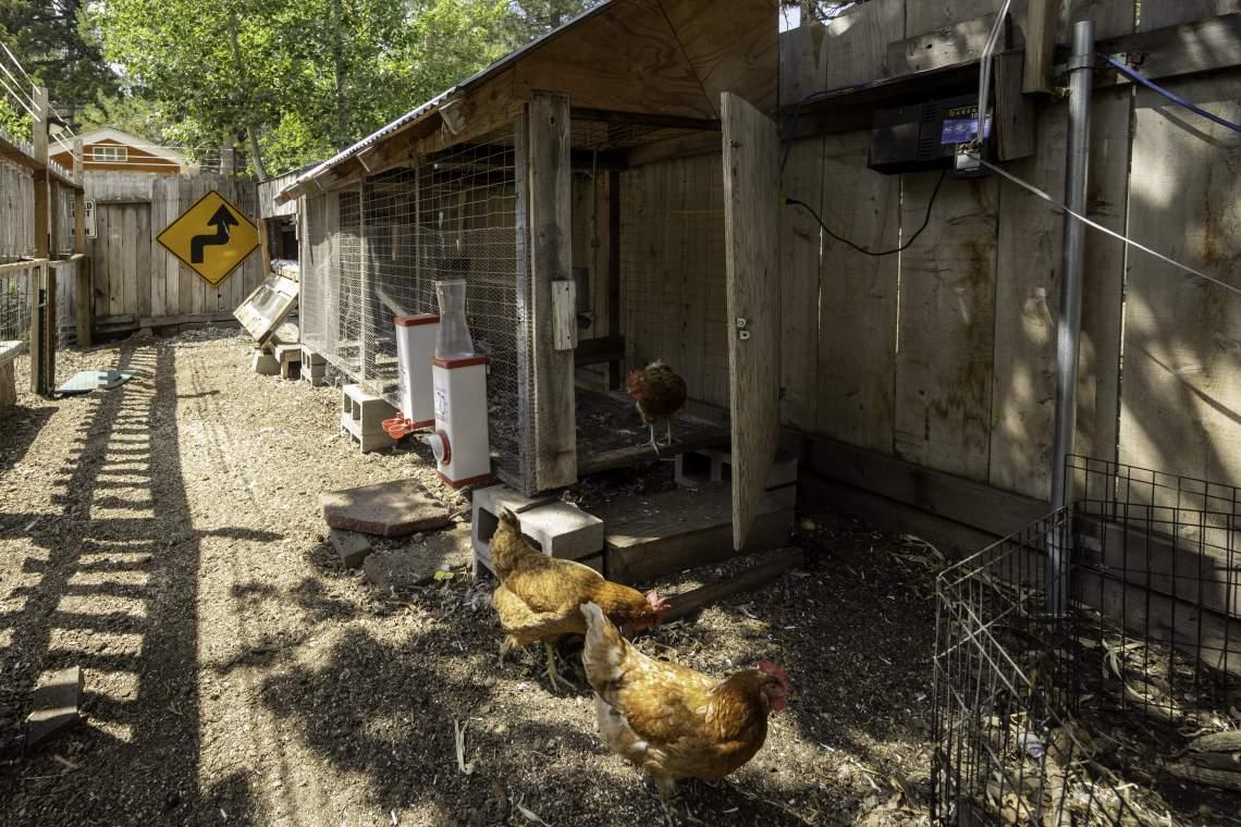 Chicken-Coop-3